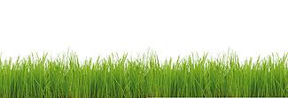 Lechner Arbeitsplatte - Lechner Glas Motive - Artikel Nr. M12 - Green Grass