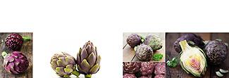 Lechner Arbeitsplatte - Lechner Glas Motive - Artikel Nr. M36 - Purple