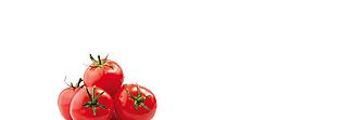 Lechner Arbeitsplatte - Lechner Glas Motive - Artikel Nr. M41 - Tomatoes