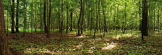 Lechner Arbeitsplatte - Lechner Glas Motive - Artikel Nr. M60 - Forest